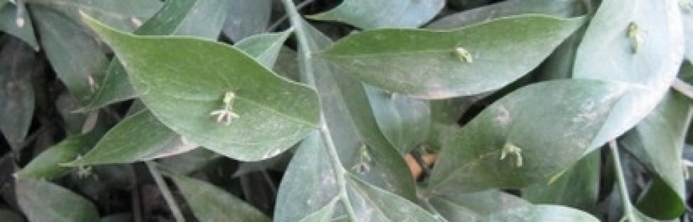 Herbs That Help Enhance Fertility